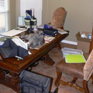 """Photo of my cat, Bo, """"helping"""" with my scrapbooking.  Blog post about crops on National Scrapbook Day 2019."""